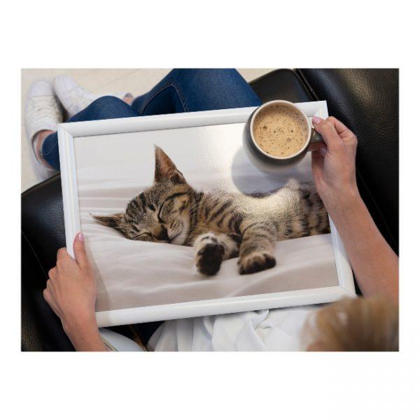 schootkussen-slapende-kitten